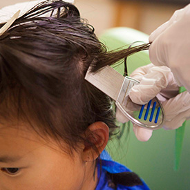 professional head lice treatment and comb-out at heartland healthy heads